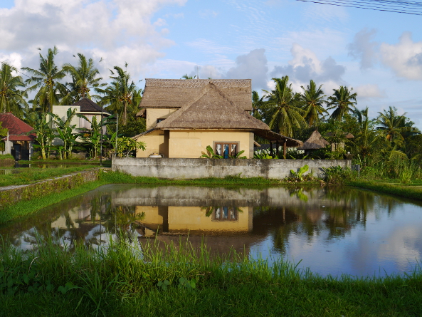A house in the ricefield makes for an idyllic scene, but has economic and environmental issues attached to it.